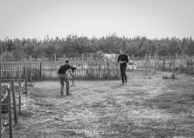 collectif-egerie-cavaliers-yeguada-cartujanos-del-sol-bts-28